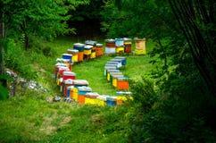 Rijen van kleurrijke houten bijenbijenkorven in bosweideopheldering stock foto's