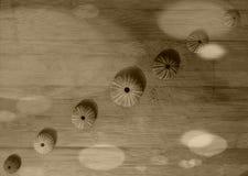 Rijen van overzeese shells Stock Afbeeldingen