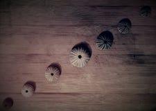 Rijen van overzeese shells Stock Foto