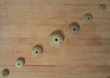 Rijen van overzeese shells Stock Foto's