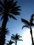 Rijen van palmen stock fotografie