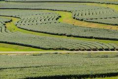 Rijen van theebomen in de vallei bij Chinees theelandbouwbedrijf Mooi groen theegebied in de vallei onder blauwe hemel en witte w Royalty-vrije Stock Foto