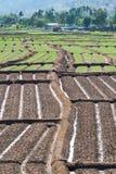 Rijen van uien en rijen van grond Royalty-vrije Stock Foto
