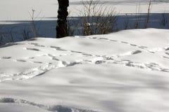Rijen van voetstappen in grote sneeuw in de bergen op een zonnige dag royalty-vrije stock foto's