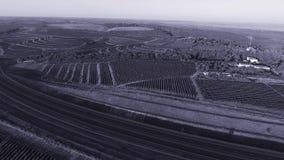 Rijen van wijngaard alvorens te oogsten stock videobeelden