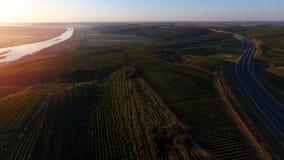 Rijen van wijngaard alvorens te oogsten, hommelmening Stock Afbeelding