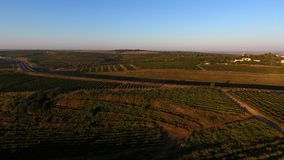 Rijen van wijngaard alvorens te oogsten, hommelmening Royalty-vrije Stock Foto