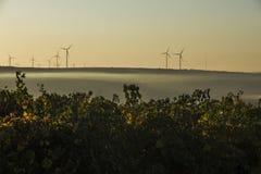 Rijen van wijngaard en windturbines Royalty-vrije Stock Foto