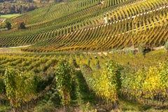 Rijen van wijngaarden in Piemonte, Italië Stock Afbeelding