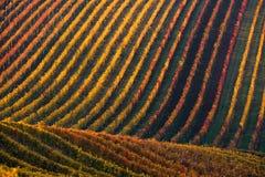 Rijen van WijngaardWijnstokken Het landschap van de herfst met kleurrijke wijngaarden Druivenwijngaarden van Zuid-Moravië in Tsje Stock Afbeelding