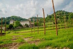 Rijen van wijnstokken Stock Foto's