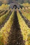Rijen van wijnstokken en wijngaarden, Toscanië, Italië Royalty-vrije Stock Foto's
