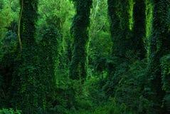 Rijk groen mos en kleine witte bloemen stock foto for Groen rijk