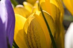 Rijke de lentebloemen Stock Foto's