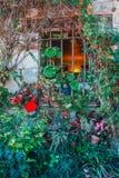 Rijke flora op de voorgevel royalty-vrije stock fotografie