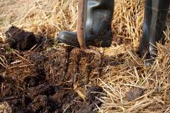 Rijke organische muls van mest en stro Stock Fotografie