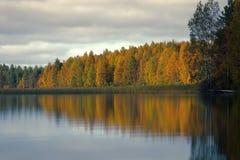 Rijke waaier van kleuren van de herfstbos op kust van stil mistig meer stock afbeelding