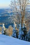 Rijp behandelde bomen in de winterberg royalty-vrije stock afbeelding