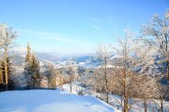 Rijp behandelde bomen in de winterberg stock afbeeldingen
