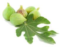 Rijp groen fig.vruchten en blad Royalty-vrije Stock Fotografie