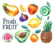 Rijp het ontwerpmalplaatje van het fruit vectorembleem Vers voedsel Royalty-vrije Stock Foto's