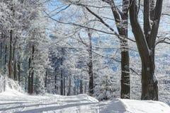 Rijp op bomen Stock Fotografie