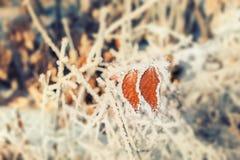 Rijp op de boom in de winterbos Stock Afbeelding