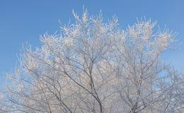 Rijp op de takken van bomen Royalty-vrije Stock Afbeeldingen