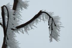 Rijp op de takken van een boom in ijzige en winderige weersomstandigheden wordt gevormd die royalty-vrije stock afbeelding