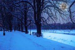 Rijp op een de winternacht Royalty-vrije Stock Foto
