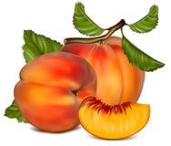 Rijp perzikfruit met groene bladeren. Stock Fotografie
