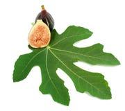 Rijp purper fig.vruchten en blad Royalty-vrije Stock Afbeeldingen