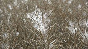 Rijp raapzaadgebied in nevelige ochtend anddewy spinnewebben stock videobeelden