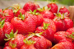 Rijp Rood Berry Of Strawberry Stock Foto's