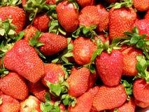 Rijpe aardbeien royalty-vrije stock foto