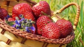 Rijpe aardbeien in een mand Royalty-vrije Stock Foto's