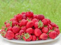 Rijpe aardbeien op een witte plaat Veel rode bessen Vage groene achtergrond Stock Afbeeldingen