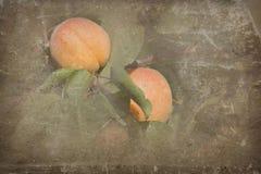 Rijpe abrikozen royalty-vrije stock foto's