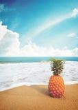 Rijpe ananassen op het zandige tropische strand met duidelijke blauwe hemel Royalty-vrije Stock Fotografie