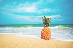 Rijpe ananassen op het zandige tropische strand met duidelijke blauwe hemel royalty-vrije stock foto