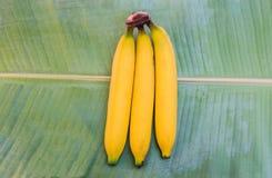 Rijpe bananen op blad Stock Foto's