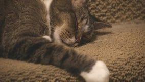 Rijpe Cat Sleeping op Vloer stock video