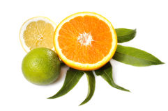 Rijpe citrusvruchten Royalty-vrije Stock Foto's