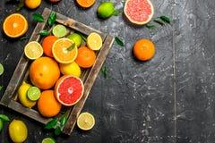 Rijpe citrusvruchten met bladeren in een dienblad royalty-vrije stock foto