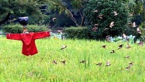 Rijpe de rijst wit-Rumped Munia-het voederen royalty-vrije stock afbeelding