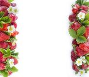Rijpe die aardbeien op een wit worden geïsoleerd Aardbeien bij grens van beeld met exemplaarruimte voor tekst Stock Afbeelding