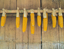 Rijpe Droge Maïskolven die op Oude Bamboemuur hangen stock foto