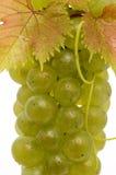 Rijpe druiven Royalty-vrije Stock Foto