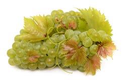 Rijpe druiven Stock Afbeelding