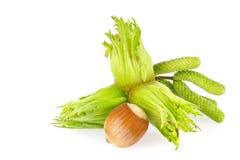 Rijpe en groene vruchten van hazelnoten met bloem Royalty-vrije Stock Afbeeldingen